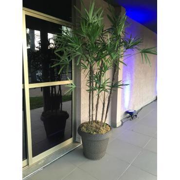 Planta Ráfia